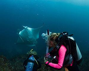 This Scuba Introductory Dive Course offers anyone the opportunity to try scuba diving. Receive...