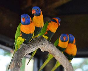 Enjoy a scrumptious lunch in the company of vibrant feathered creatures at Wildlife Habitat. As the air...