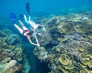 A guided snorkelling tour is an ideal way to explore the wonders of the Great Barrier Reef. Your day...