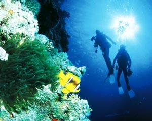 This is a fantastic opportunity to gain your PADI Open Water in the Outer Great Barrier Reef. The...