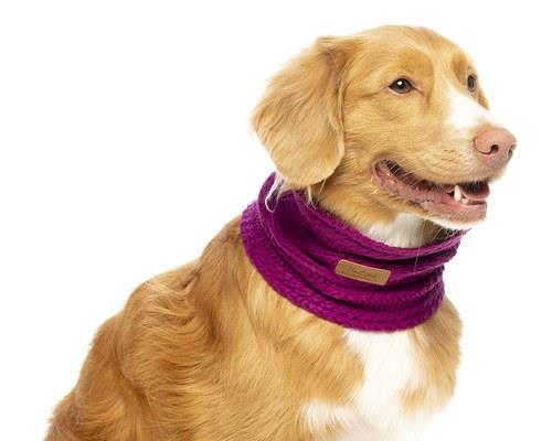 Animals & Pet Supplies > Pet Supplies > Dog Supplies > Dog Apparel
