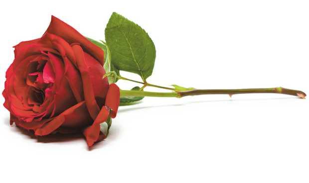 MELGERT, Valerie Margaret 13.9.1929 - 12.5.2015   5 years since you've gone Mum but you...