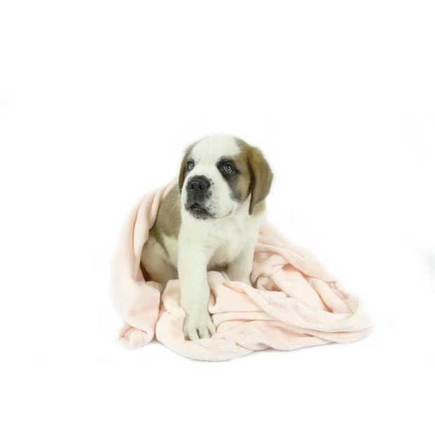 When it comes to snuggling up with your pet, you can't beat the T & S Snuggle Pet Blanket Pink. Big...