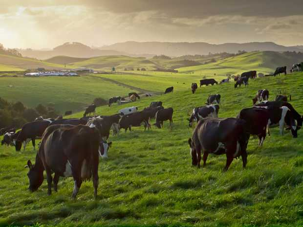 Dairy Farm Manager Position Available