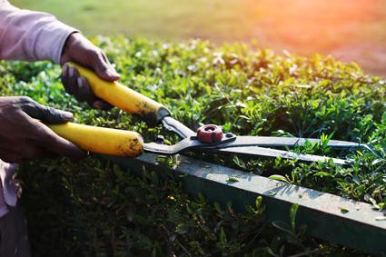 ALLPRUNING- Gardening & Maintenance   Servicing Northern, Eastern & Western Suburbs...