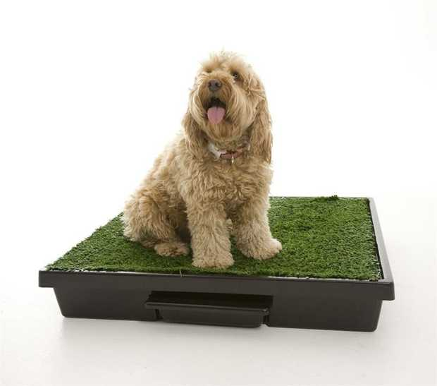 The Original Pet Loo for Indoor or Outdoor Use - Medium