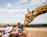 For the ultimate zoo experience, go on safari just outside of Adelaide and hand feed the giraffes in...