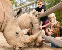 For the ultimate zoo experience, go on safari just outside of Adelaide! Spend the day exploring Monarto...