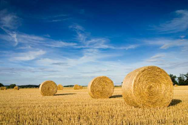 Hay & Straw   Oaten Hay   Wheat & Barley Straw.   Header Trails & Windrowed   No Rain, All...