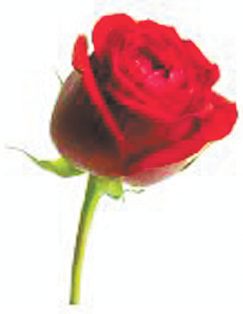 WESTON, Judith (nee Partridge)   Passed away peacefully aged 83 years   Our beautiful Judith, you...