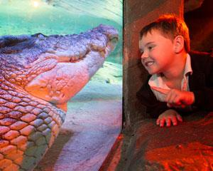 Get around the marine life excitement at SEA LIFE Melbourne Aquarium! With interactive animal...