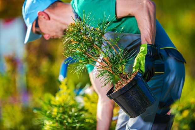 *Garden Maintanence   * Pruning Turf maintenance   * Aboriculture work   *Green waste...