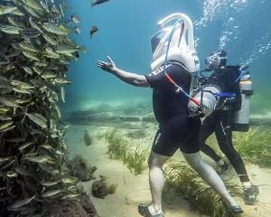 Take the plunge and discover the exciting marine world beneath the Busselton Jetty on this undersea...