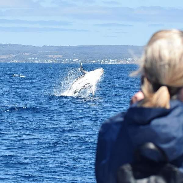 With a #1 rating on Trip Advisor and Certificate of Excellences in 2016, 2017, 2018, and 2019, a whale...
