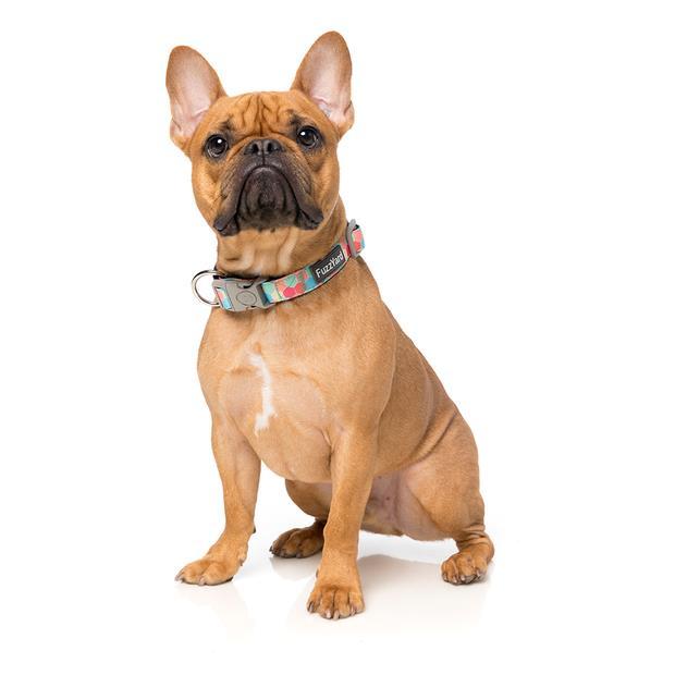 fuzzyard collar the hive  small | FuzzYard dog | pet supplies| Product Information:...