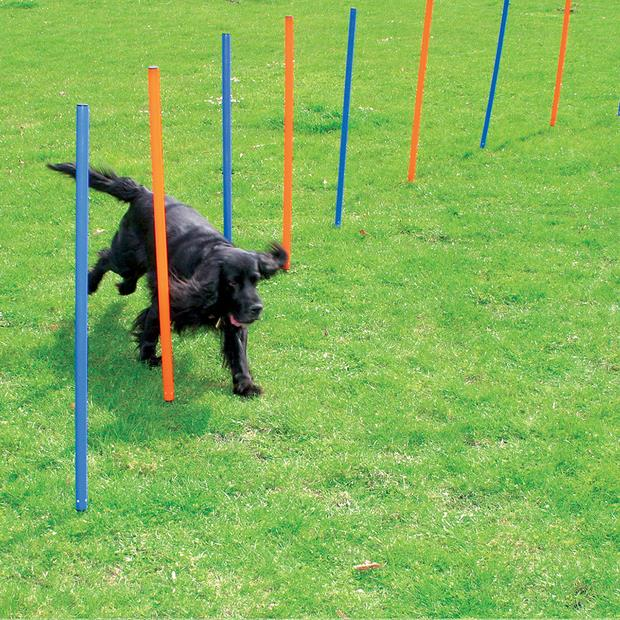 pawise agility poles  each | Pawise dog toy&accessories; | pet supplies| Product Information:...