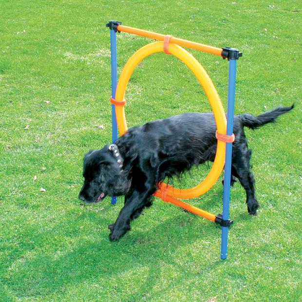 pawise agility ring  each | Pawise dog toy&accessories; | pet supplies| Product Information:...