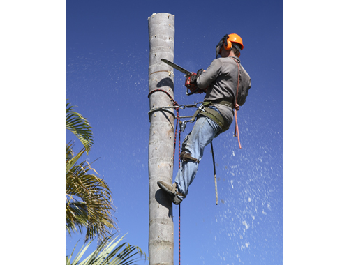 Experienced Tree Climber  MR CLIP  Need Rope & Harness Experience & Truck...