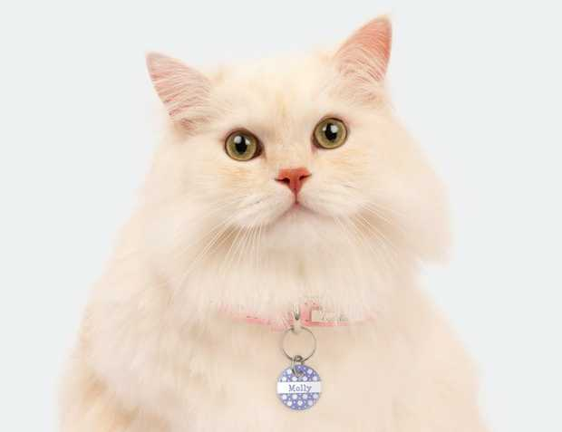 Looking for a Cat Tag that matches your cat's personality? Our Premium Cat Tags are perfect for cats &...