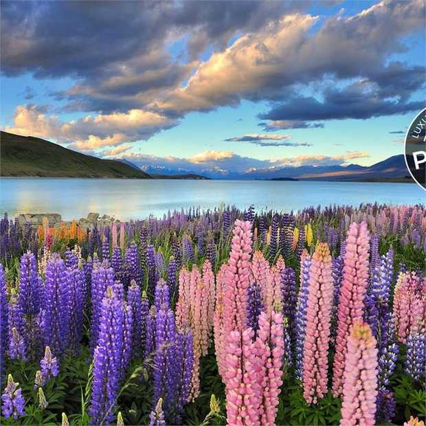 There's no need to whittle down your list of New Zealand must-sees on this unmissable 17-day North and...
