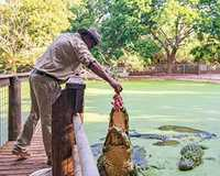Come face to face with one of the mightiest predators in the world on this 2.5-hour crocodile feeding...