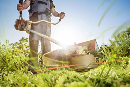 BLUESKIES MOWING    Lawn mowing, Trim Hedges & Edges.   Garden Clean Ups & Rubbish...