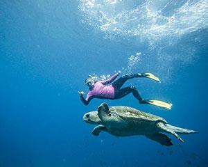 Snorkel the magnificent Julian Rocks Marine Reserve which is home to 3 different species of sea turtle...