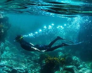 Discover the marine world beneath the surface at Jervis Bay on this five-hour snorkelling and...