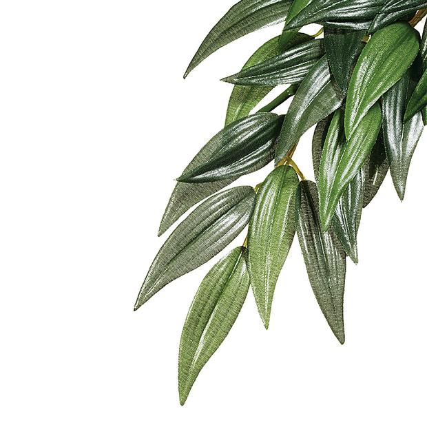 Exo Terra Forest Plant Ruscus Small Pet: Reptile Category: Reptile & Amphibian Supplies  Size: 0kg...