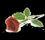 MCFAUL, Roy Vincent05-Jul-1936 - 03-Sep-2020Roy Vincent McFAULof Nanyima Aged Care, Miraniformerly of...
