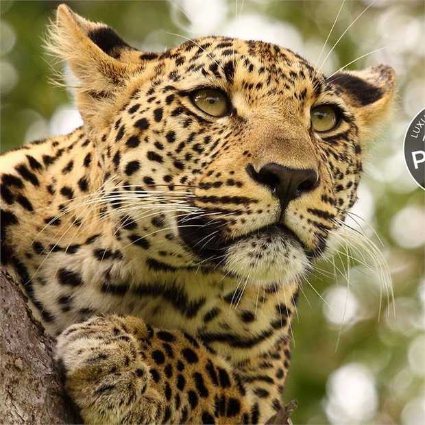 Home to iconic wildlife, captivating cultures, spectacular scenery and intricate history, South Africa...