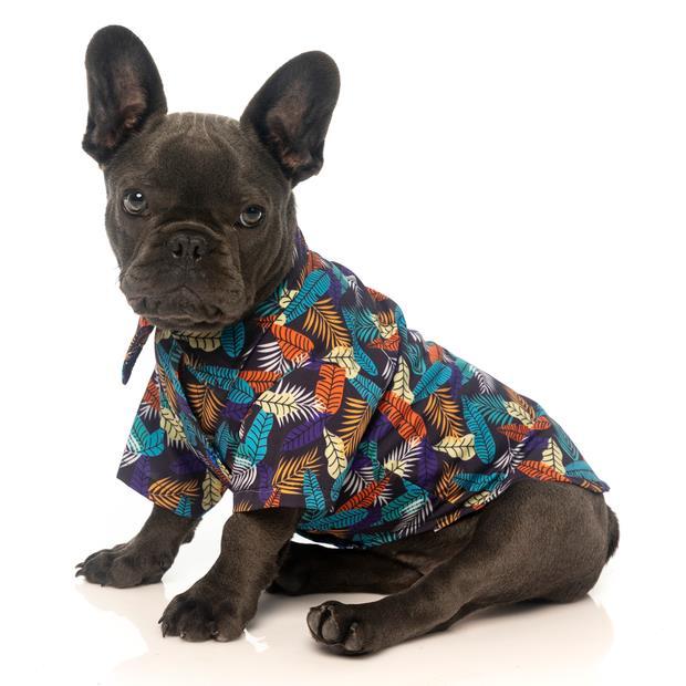 Fuzzyard Shirt Mahalo Size 4 Pet: Dog Category: Dog Supplies  Size: 0.1kg Colour: Blue  Rich...