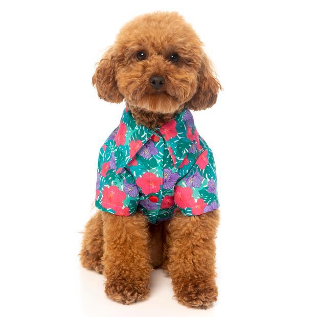 Fuzzyard Shirt Lahania Size 4 Pet: Dog Category: Dog Supplies  Size: 0.1kg Colour: Green  Rich...