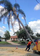 Coconut & palm seeds removed