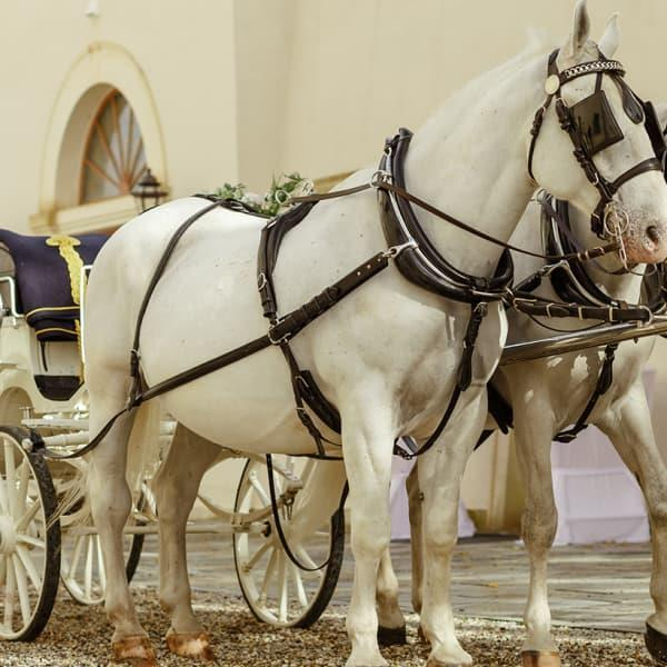 Get a taste of royalty with a remarkably unique experience from Distinctive Melbourne Carriages. Take...