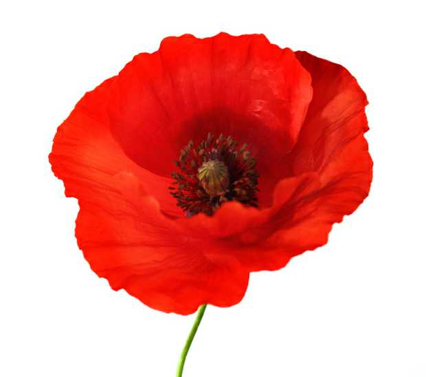 The President and Members of RYE RSL regret the passing of their esteemed member and offer deepest...