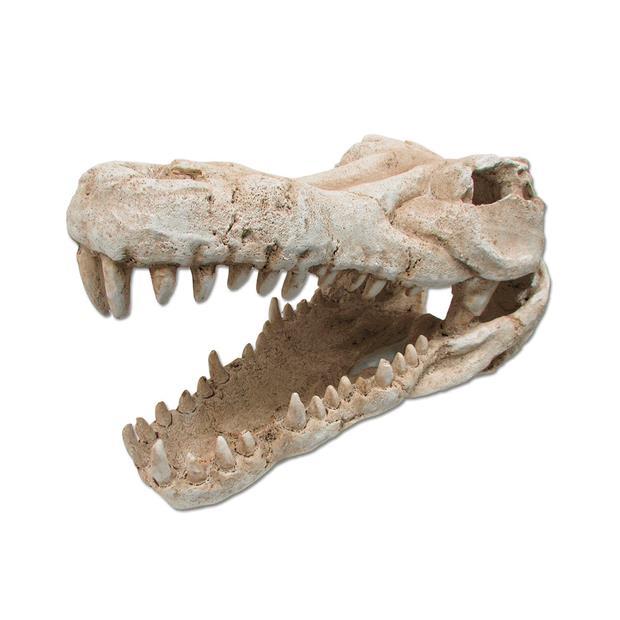 Ipetz Croc Skull Large Pet: Reptile Category: Reptile & Amphibian Supplies  Size: 4.3kg  Rich...