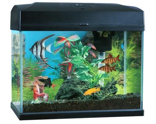 BLUE PLANET CLASSIC AQUARIUM 20L 37X33.5X25CMThe Blue Planet Classic aquarium kit provides everything...
