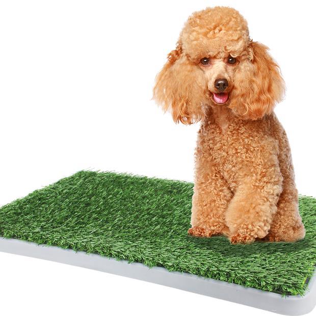 Dogit Green Dog Trainer Toilet Each Pet: Dog Category: Dog Supplies  Size: 1.9kg  Rich Description:...