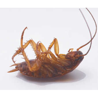 Free Quotes - Termite specialist.Pensioner discount. Competitive rates.All Pests.Lic 3545Servicing...