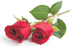 18/09/1929 - 03/04/2021   Beloved and devoted mother of Rachael, Aaron, Rebecca, Laurel, Amanda...