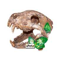 Urs Skull With Big Canines Each Pet: Reptile Category: Reptile & Amphibian Supplies  Size: 0.9kg  Rich...