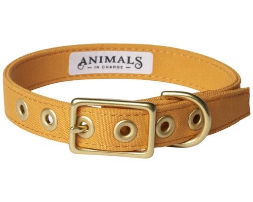 ANIMALS IN CHARGE HARVEST YELLOW COLLAR LARGEYellow is the new green when it comes to stylish...