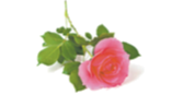 """BLEE (nee Atherton), Elizabeth Gwendoline""""Gwen""""Passed away peacefully on June 15th, 2021.Aged 98..."""