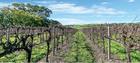 Jacob's Creek Lyndoch Vineyard