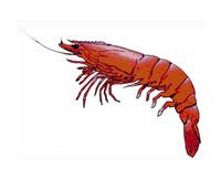 KING PRAWNS$15/kg Slightly damaged raw (5kg box min)Free Range Seafood12 Charles Rd, BEVERLEY.8268...