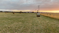 Hay for Sale Traralgon Area 5'x 4' Round Bales x 83 Available. Discount if you buy the lot. Unimproved...