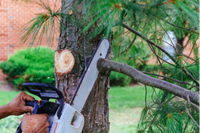 A family business with over 40 years experienceFrom $100Hedge Trimming ExpertsLarge Tree...