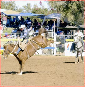 Millmerran's Peter Moffatt  at the Mt Isa rodeo.  Picture: SUPPLIED
