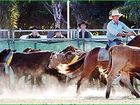 The action begins at the Bay rodeo